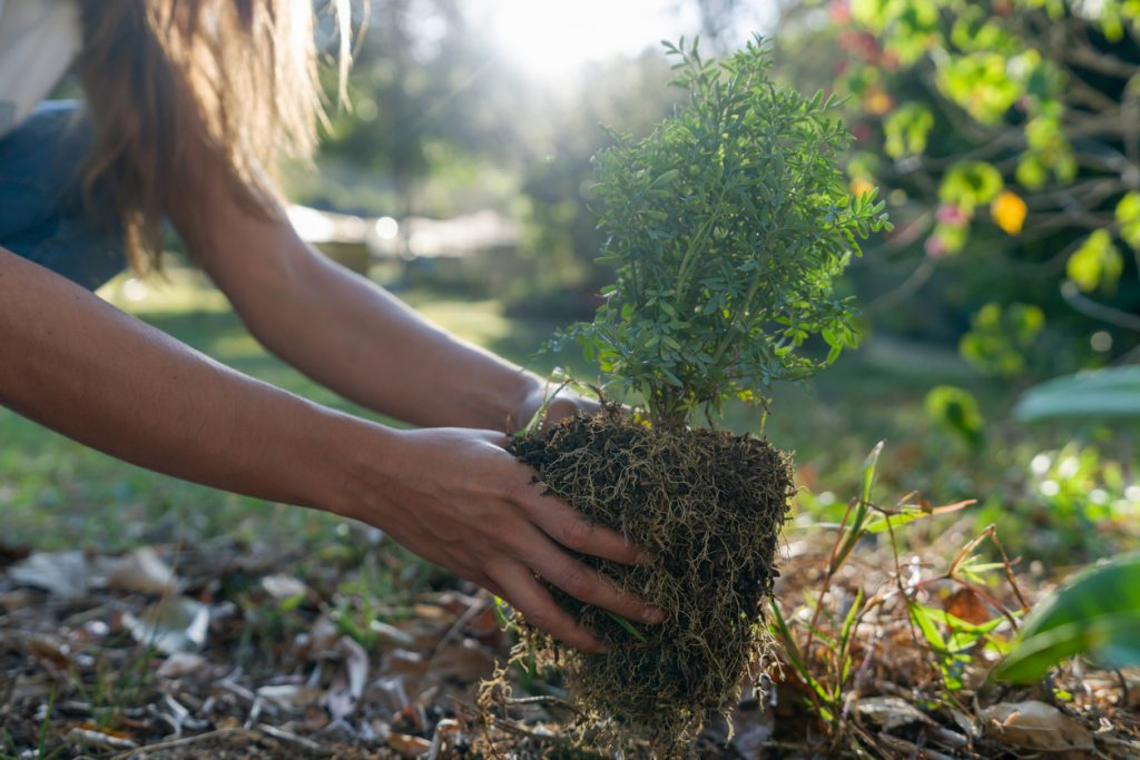 Fall is a good time to plant shrubs and trees.